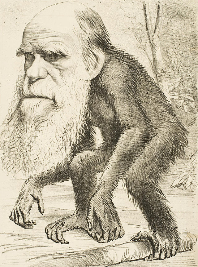 Editorial_cartoon_depicting_Charles_Darwin_as_an_ape_(1871)