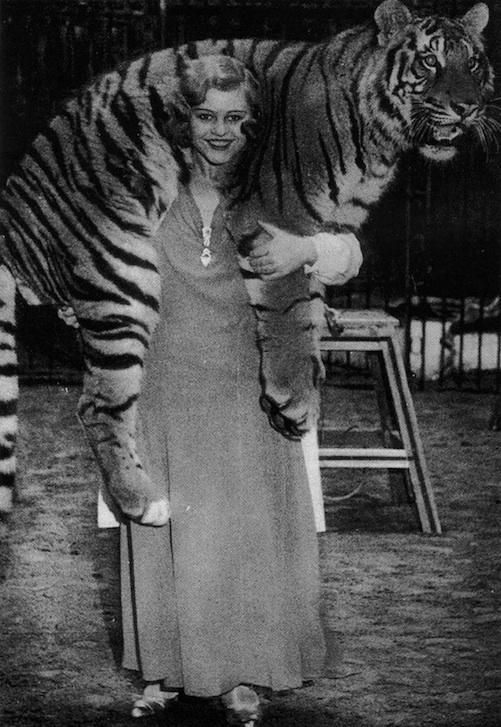 Miss Cilly performed in the circus with tigers from 1931-1938