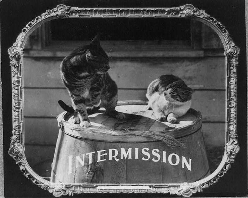 vintage cats 15