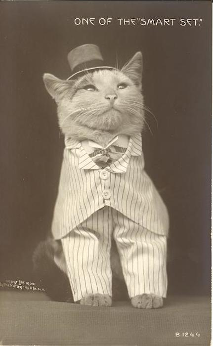 vintage cats 10