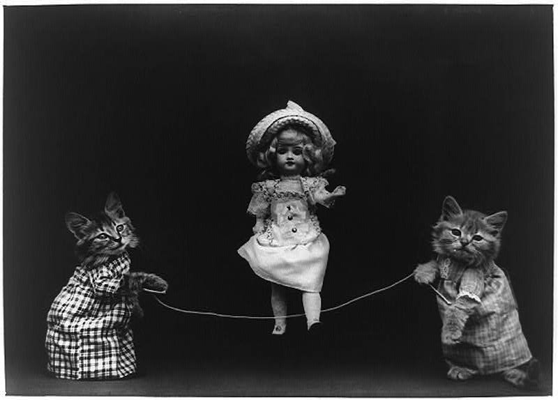 vintage cats 11
