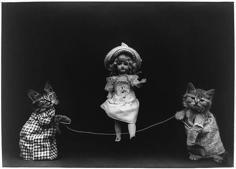 vintage cats 11