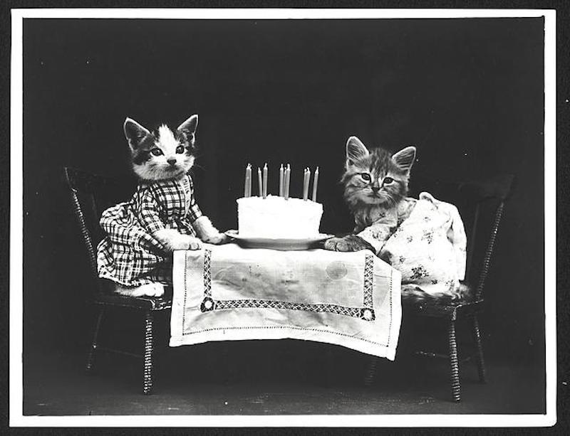 vintage cats 12