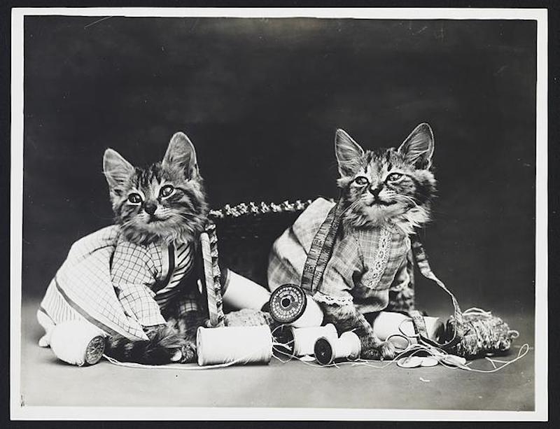 vintage cats 13