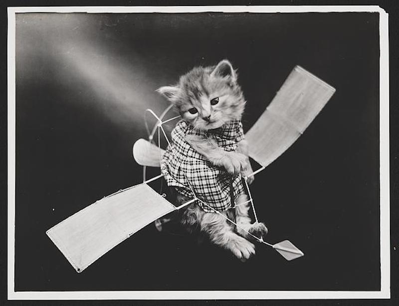 vintage cats 14